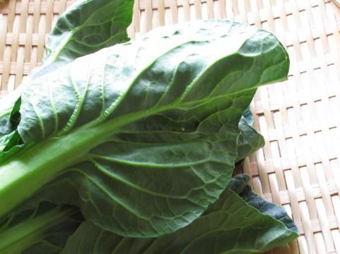 小松菜 家庭菜園