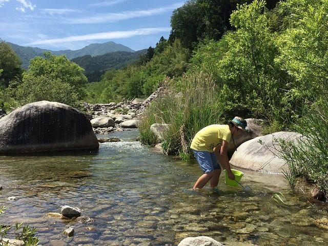田舎の川遊び 生き物探し