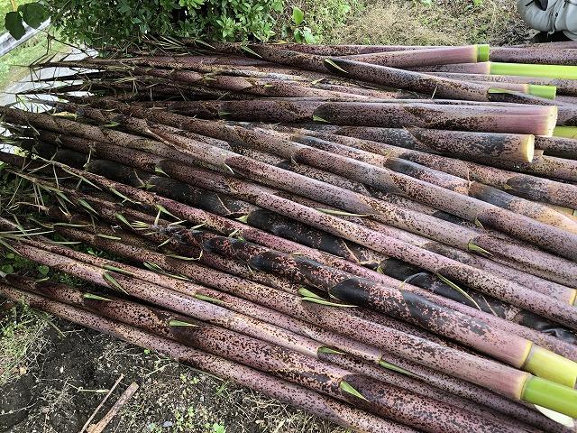 放置竹からメンマを作る方法