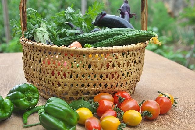 家庭菜園・野菜つくり